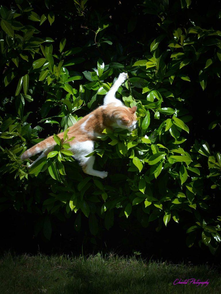 un chat sautant dans des feuillages
