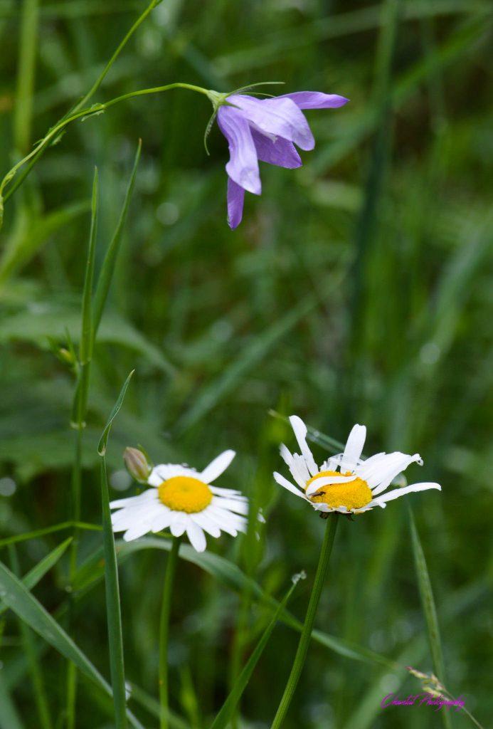 détail de fleurs dans des herbes hautes