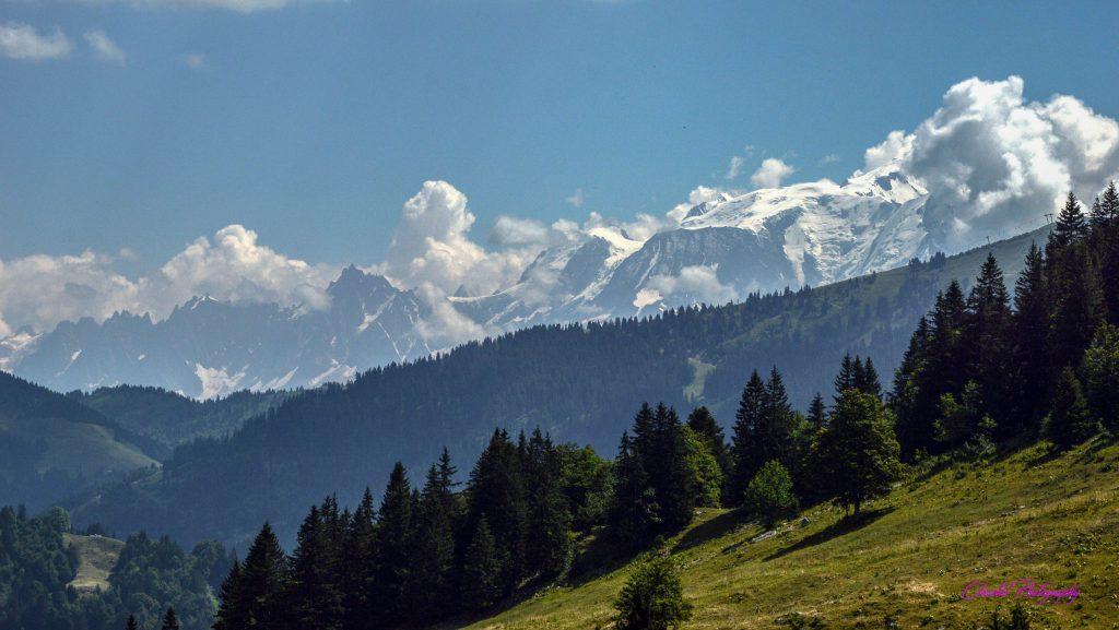 paysage de montagnes enneigées et de forêts de conifères